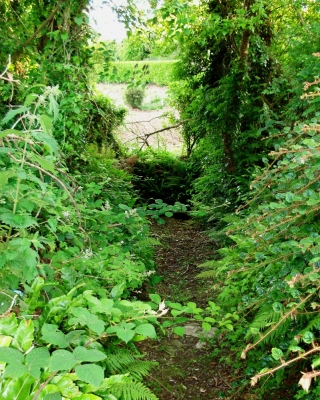 Path leading down to the well. It is barely noticeable from the road.