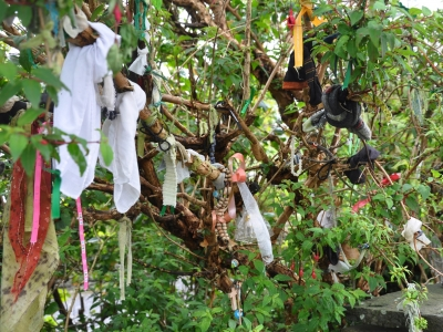 The rag tree which is over the well, with a selection of rags tied to the branches.